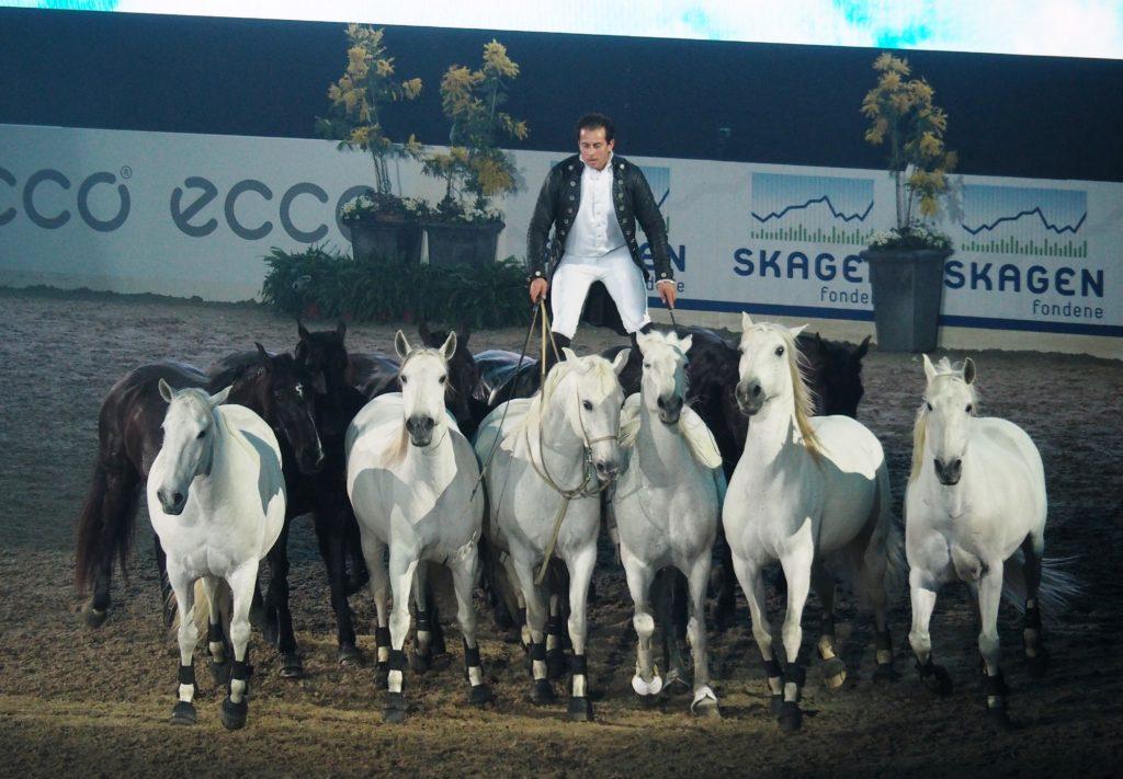 hest og rytter - herning horseshow -dansk varmblod hingstekåring
